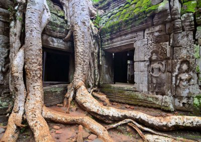 Trees taking over Ta Prohm temple